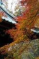 薬王院の紅葉 - panoramio (1).jpg
