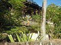 01155jfPoblacion Old Houses San Vicente San Miguel Bulacan Bulacanfvf 24.jpg