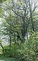08 2012 Bystrice-pod-Hostynem pamatny-strom Dub-pod-Dubickem.jpg