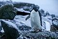 092-antartica 4O7A9865 (32736100723).jpg