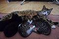 1-month-old kittens 06.jpg