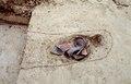 10-164 D197A015 Spijkenisse Borgtweg crematiekuil Romeinse tijd 1992.tif