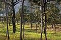 100 4743 - panoramio.jpg