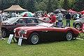 1955 Austin Healey 100 - Flickr - dave 7.jpg