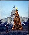 1968 U.S. Capitol Christmas Tree (31432742240).jpg