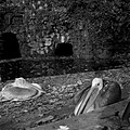 20.11.1961. Animaux au jardin des plantes. (1961) - 53Fi3081.jpg