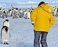 2007 Snow-Hill-Island Luyten-De-Hauwere-Emperor-Penguin-22.jpg