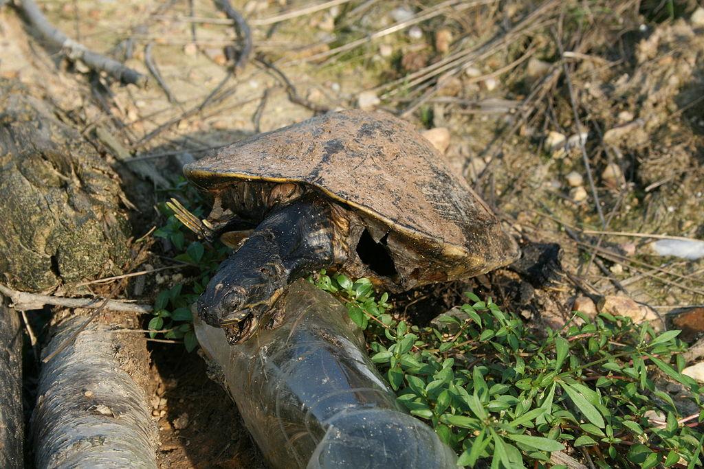 Turtle creek black dating site