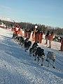 2008 Iditarod Willow (2312157561).jpg