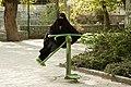 2009 Tajrish Tehran 3658524246 by Kamyar Adl.jpg