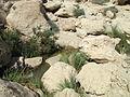 2011-08 En Gedi David river 03.jpg