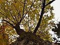 2012-10-24 17-11-08-feuillage-arbre.jpg