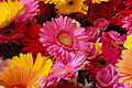 2013 Melbourne International Flower and Garden Show (8585140812) (3).jpg