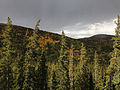 2014-09-15 14 21 59 View north from the Bristlecone Trail and the Glacier Trail towards the coloring Aspens of Bald Mountain in Great Basin National Park, Nevada.JPG