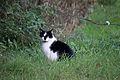 20141102- Black and White Cat by sebaso 03.jpg