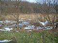 20150219 85 Wienerwaldsee (Large) (16581062352).jpg