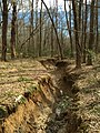 2016-03-01 14 05 52 View down a severely eroded tributary of Little Difficult Run within Fred Crabtree Park in Reston, Fairfax County, Virginia.jpg