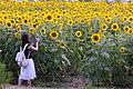 2017-07-15 Ono-himawarino-oka-park (小野市立ひまわりの丘公園) 6326.jpg