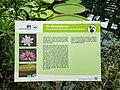 2018-06-18-bonn-meckenheimer-allee-169-botanischer-garten-victoriahaus-05.jpg