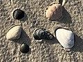 2020-10-18 17 10 26 Sea shells on the beach near East 9th Street in Barnegat Light, Ocean County, New Jersey.jpg