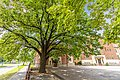 2020 The Freedom Tree in Kaposvár HU.jpg