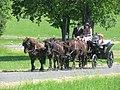 21te Rammenauer Schlossrundfahrt der Pferdegespanne (133).jpg