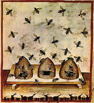 Beekeeping - Beekeeping, tacuinum sanitatis casanatensis (14th century)