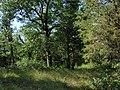 28 Cedars Trail, Pinery Provincial Park.jpg
