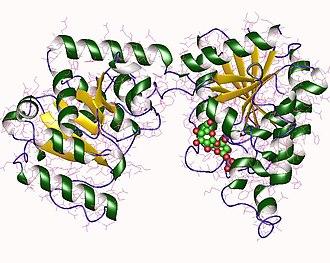 Sucrose-phosphate synthase - Sucrose phosphate synthase monomer, Halothermothrix orenii