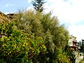 A@a colors palehori village cyprus - panoramio (5).jpg