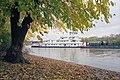 A4j022 9mp American Beauty, mulberry tree (6371670761).jpg