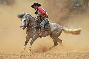 Criollo horse - Gaucho with Criollo