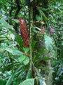 APA Guaraqueçaba - Flora aerea.JPG