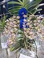 APOC 12 - orchid exibition in Bangkok (2016) (27347294682).jpg