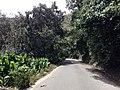 ARBOLES AGUAKATHES - panoramio.jpg