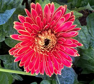 A Gorgeous Flower at Nursery.jpg