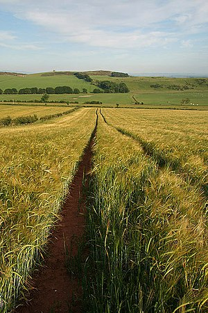 History of agriculture in Scotland - A barley field at Brotherstone Hill South in the Scottish Borders