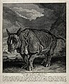 A rhinoceros, also known as Miss Clara, shown with a lake an Wellcome V0020985.jpg