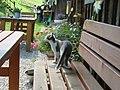 AaaIMG 0486 Sennalpe Hochried Kätzchen.jpg