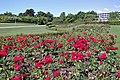 Aarhus rose garden.jpg