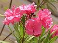 Ab plant 1375.jpg