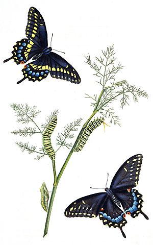 John Abbot (entomologist) - Image: Abbotv 1tab 01AA