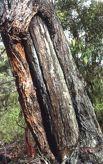 Aboriginal sites of New South Wales - Image: Aboriginal Site 0007