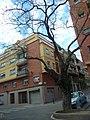 Acàcia del Japó del carrer del Mas Duran P1500899.jpg