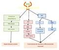 Acción celular FCN.pdf