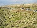 Ackerley Moor - geograph.org.uk - 379851.jpg