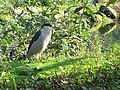 African water bird - geograph.org.uk - 590876.jpg