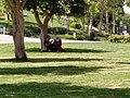 Al-Azhar Park Cairo (2).jpg
