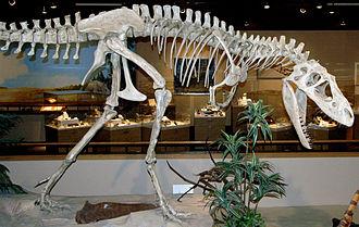 Albertosaurus - Cast in Dakota Dinosaur Museum