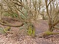 Alderney, path over a tree - geograph.org.uk - 1712095.jpg